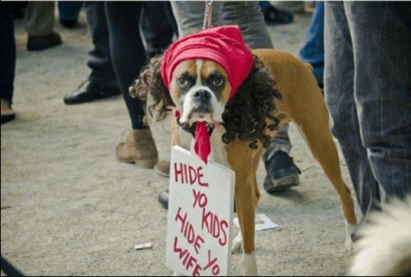 perros listas animales fotos - 1000453