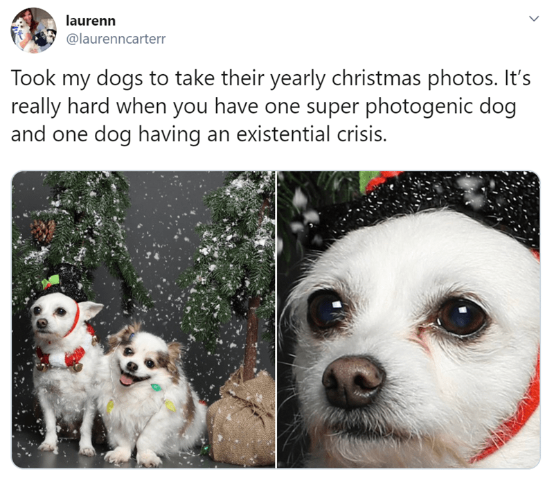 Funny tweets of animals at Christmas | Funny meme tweet of a pair of dogs photographed for the holidays and one is happy as can be and the other looks like he is have existential crisis