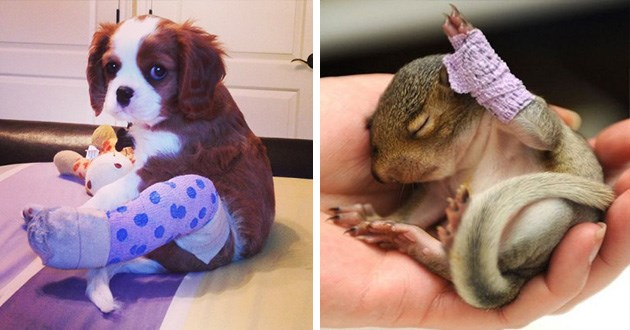 animals with casts on their legs that still look cute despite their injury | cute puppie wearing a leg cast on his hind paw and a sleeping otter with a bandaged up wrist and forearm