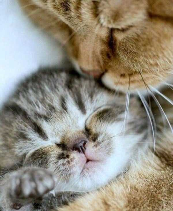incredible pictures of animals | sleeping and napping kittens being adorable and sleepy at the same time in a clearly passive manner
