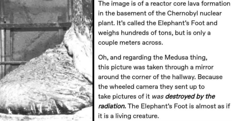 A quick Tumblr thread shares the story of a terrifying monster mold in Chernobyl | Text - The image is of a reactor core lava formation in the basement of the Chernobyl nuclear plant. It's called the Elephant's Foot and weighs hundreds of tons, but is only a couple meters across. Oh, and regarding the Medusa thing, this picture was taken through a mirror around the corner of the hallway. Because the wheeled camera they sent up to take pictures of it was destroyed by the radiation. The Elephant's