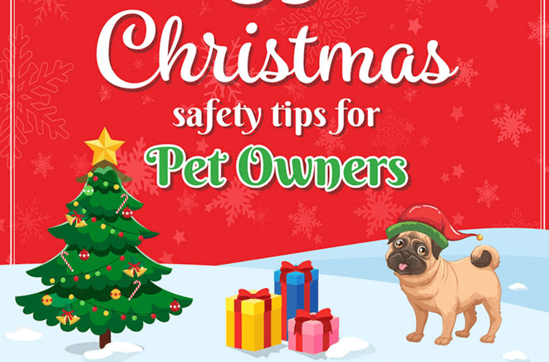 infographics about pet safety tips for pet owners on christmas | cute art depicting a pug dog in a christmas hat standing in a snowy landscape next to a christmas tree and some wrapped gifts