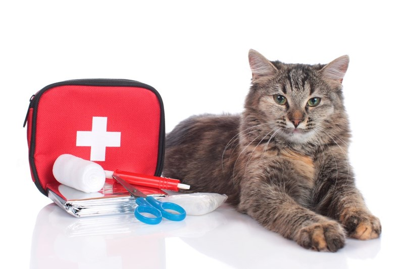 how to create a first aid kit for your pets, fluffy cat sitting neatly next to a first aid kit with scissors, gauze