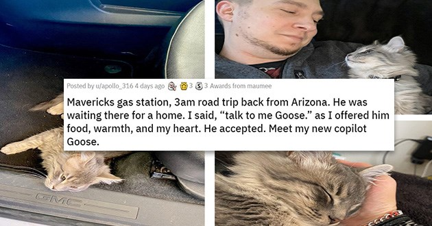 adopted cats dogs rescue   He was waiting there for a home. I said, talk to me Goose as I offered him food, warmth, and my heart. He accepted meet my new copilot Goose