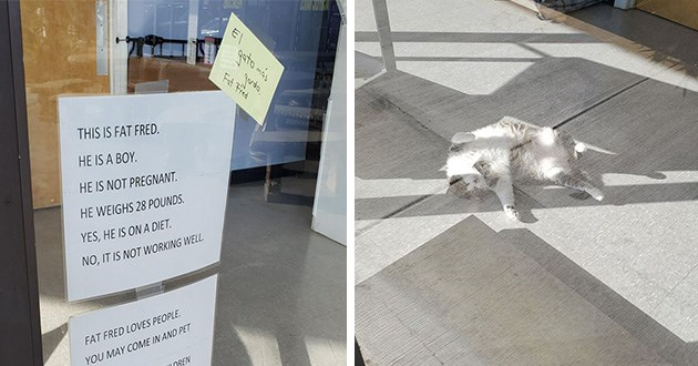 mgur shared the viral post on Facebook an image of signs taped to a glass door that shine the spotlight on their glorious chonk Fred who is living the dream