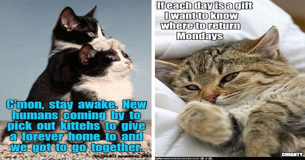 funny cat memes lolcats animals cute aww | kitten with its paws on top of another kitten's head as if keeping its eyes open and text that reads Cmon, stay awake. New humans coming by pick out kittehs give forever home and got go together. cute cat snuggled in a blanket and text that reads l feach day is a gift I want know where return Mondays
