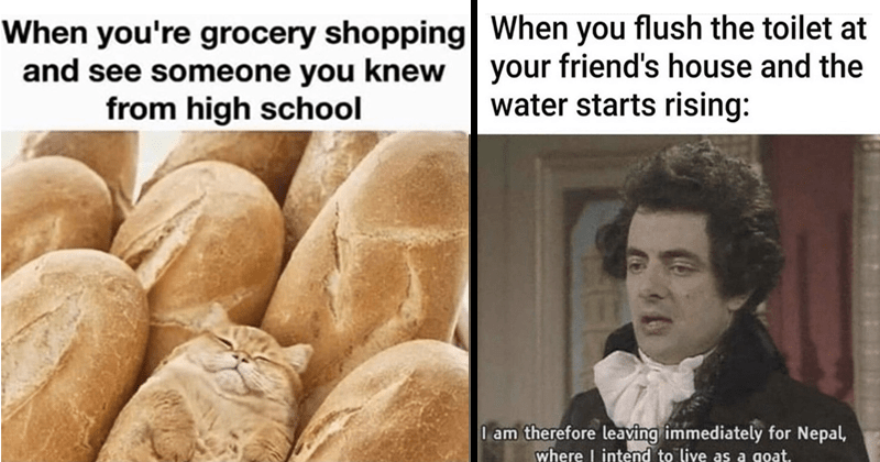 funny random memes | a cat hidden between a bunch of baguettes about grocery shopping and seeing someone knew high school. flush toilet at friend's house and water starts rising am therefore leaving immediately Nepal, where intend live as goat.