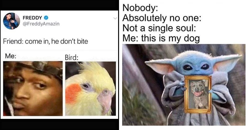 Funny memes about pets | conceited reaction meme Friend: come he don't bite Bird. baby yoda meme Nobody: Absolutely no one: Not single soul this is my dog.