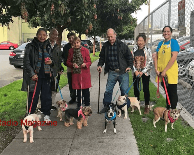 senior dogs uniting with senior citizens | six senior citizens and one younger person in an apron, posing outside on the pavement while holding leashes attached to small senior dogs