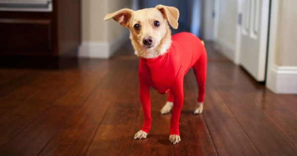 dogs bodysuit product shed funny - 1004549