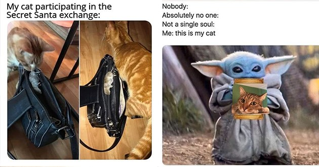 caturday funny cat memes cats kittens tweets snapchats pictures lol animals | cat dropping a dead mouse inside a hand bag My cat participating Secret Šanta exchange. baby yoda holding a photo of a cat Nobody: Absolutely no one: Not single soul this is my cat
