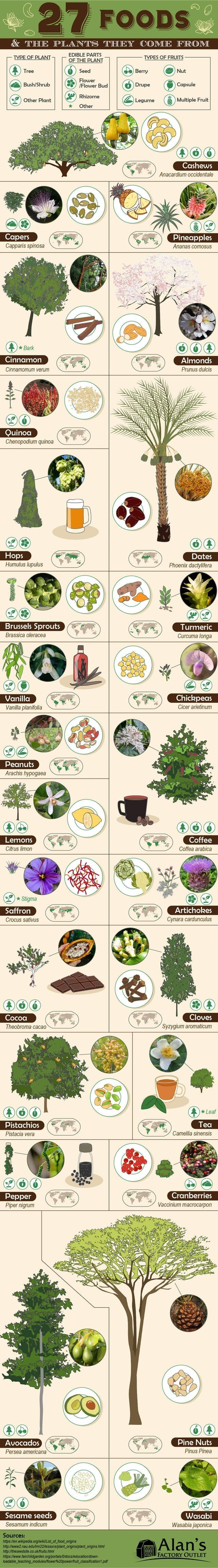 list of the daily top guides infographics | 27 FOODS PLANTS THEY COME EDIBLE PARTS PLANT TYPE PLANT TYPES FRUITS Tree Seed Berry Nut Flower /Flower Bud 6 Drupe Capsule Bush/Shrub Rhizome Legume Multiple Fruit Other Plant Other Cashews Anacardium occidentale Capers Capparis spinosa Pineapples Ananas comosus Bark Cinnamon Almonds Cinnamomum verum Prunus dulcis Quinoa Chenopodium quinoa ps Humulus lupulus Dates Phoenix dactylifera Brussels Sprouts Turmeric Brassica oleracea Curcuma longa Chickpeas
