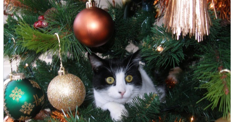 A collection of Twitter users share their wholesome cat in a tree moments | black and white car sitting among baubles in a decorated Christmas tree