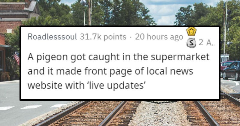 People share stories of their small town's big scandal   pigeon got caught supermarket and made front page local news website with 'live updates'