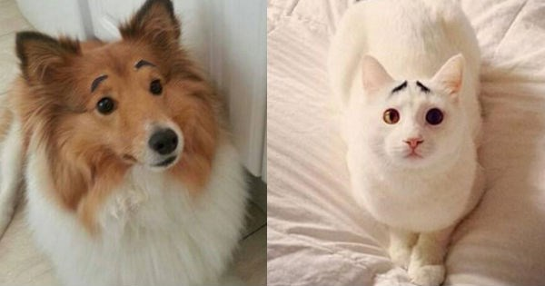 funny cats and dogs with eye brows to make them into funny faced animal memes