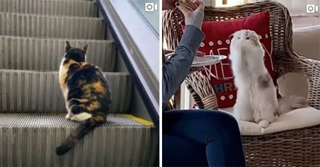 cats kittens cute instagram top best funny videos weird | spotted cat sitting on an escalator and fluffy cream cat begging by putting its paws together