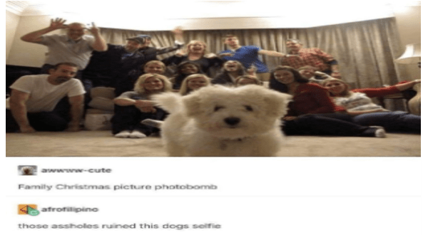 Wholesome animal memes about Christmas | family photo photobombed by a tiny fluffy dog who walked into frame awwww-cute Family Christmas picture photobomb afrofilipino those assholes ruined this dogs selfie