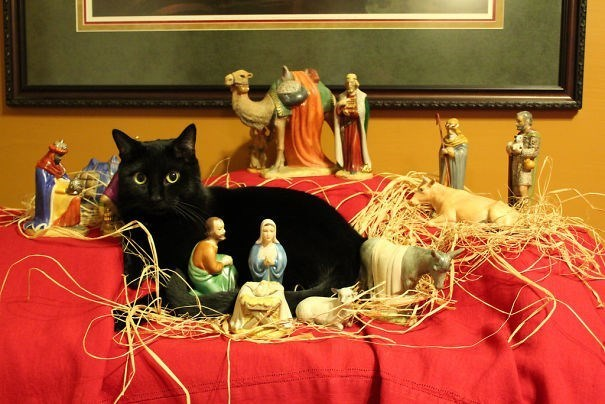 cats taking over nativity scenes | black cat sitting in the middle of a nativity scene surrounded by figurines