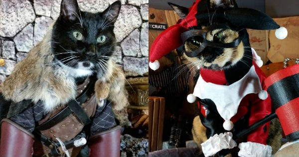 This Cat's Cosplay Game Is So Nerdy and So Good