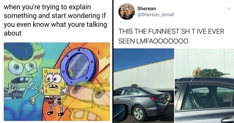 Funny random memes | spongebob stuck outside his window trying explain something and start wondering if even know youre talking about. tweet by Sherean_Ismail THIS FUNNIEST SHIT IVE EVER SEEN LMFAO000000 tiny Christmas tree tied to the roof of a car