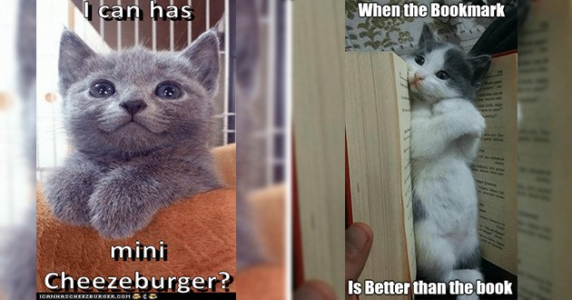funny cat memes lolcats cats animals | grey kitten an has mini Cheezeburger? cute kitten between the pages of a book WHEN BOOKMARK Is Better than book