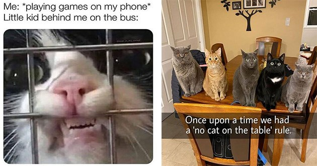 caturday funny cat memes lol vids tweets snaps | cat pressing its face to a cage. playing games on my phone Little kid behind on bus. row of different cats sitting on a table. Once upon time had no cat on table rule.