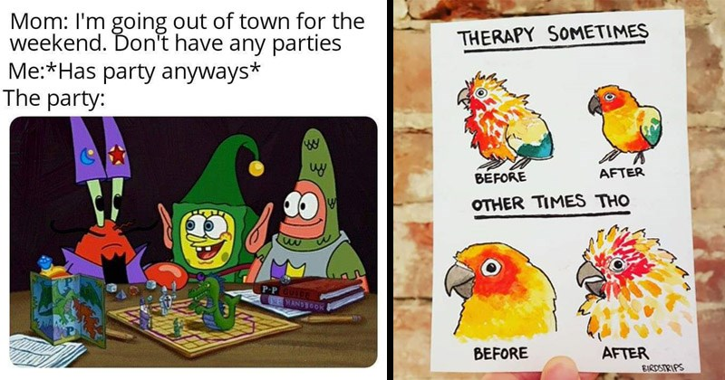 Funny random memes | spongebob patrick and mr. krabs playing dnd. Mom going out town weekend on't have any parties Has party anyways. drawings of a parrot in different states of panic. THERAPY SOMETIMES AFTER BEFORE OTHER TIMES THO BEFORE AFTER.
