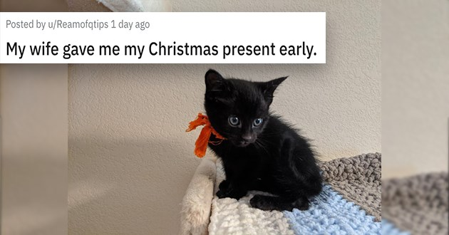 cats dogs adopt adopted adoption shelter rescue animals aww | tiny black kitten with a red ribbon tied around it's neck. My wife gave me my Christmas present early.