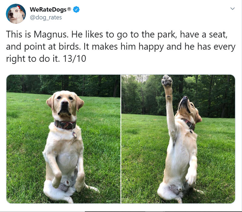 Quirky Habits Of Funny Doggos | Labrador sitting on its butt like a human. This is Magnus. He likes go park, have seat, and point at birds makes him happy and he has every right do 13/10