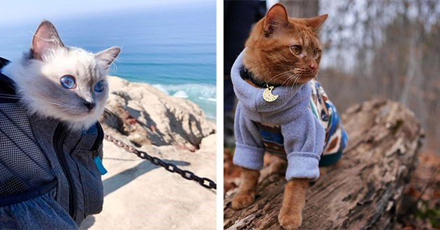 instagram adventure hiking cats cute aww | cute cat with blue eyes sitting inside a backpack with itd head peeking out. cute ginger cat in a colorful sweater and a moon shaped collar sitting on a rock.