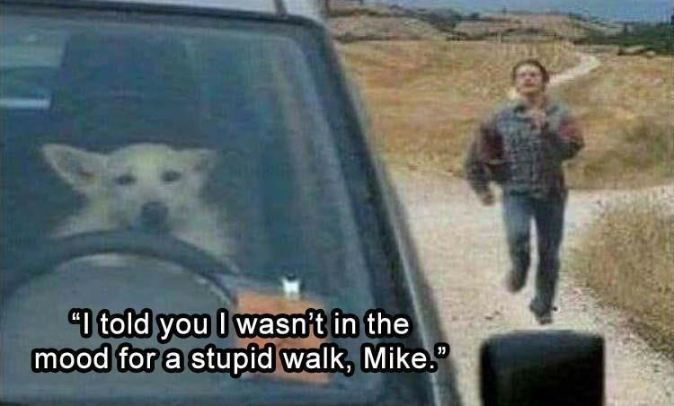 fresh animal memes | man running after a car driven by a dog. told wasn't mood stupid walk, Mike