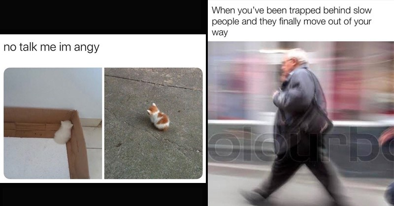 Funny random memes | tiny kittens sitting with their backs to the camera. no talk im angy. pic of person walking with a blurred effect. been trapped behind slow people and they finally move out way.