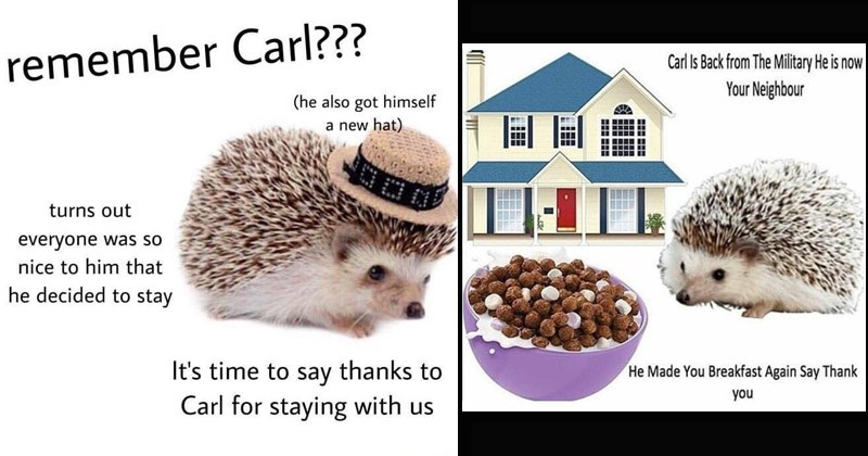 Funny memes about Carl Hedgehog | hedgehog wearing a hat. remember Carl he also got himself new hat turns out everyone so nice him he decided stay time say thanks Carl staying with us. hedgehog near a house and a bowl of cereal. Carl Is Back Military He is now Neighbor He Made Breakfast Again Say Thank.