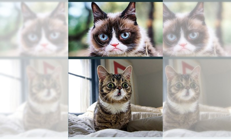 cats grumpy lil bub tribute honor legend legendary rip | cat with an angry expression, derpy cat with large eyes and tongue peeking out