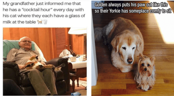 """wholesome animal memes 