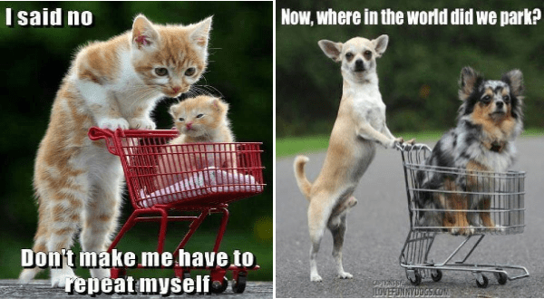 cute animals in shopping carts | mama cat pushing her kitten in a tiny shopping cart. said no Don't make have repeat myself. chihuahua dog pushing another dog in a cart. Now, where world did park?