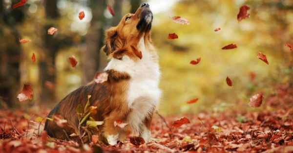 autumn dogs photography leaves fall - 1014277