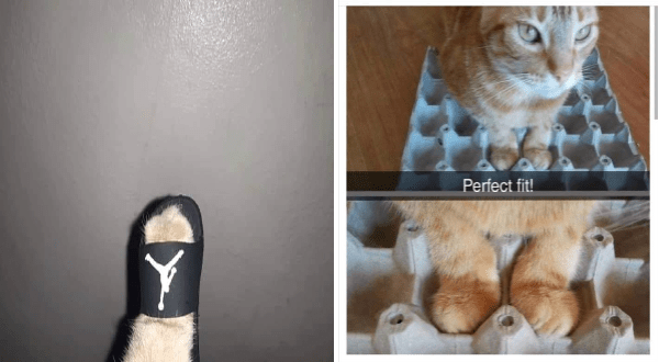 funny memes and photos of cat paws | tiny cat paw inside a tiny air jordan slider. cat placing its paws in the dimples of an egg carton. Perfect fit!