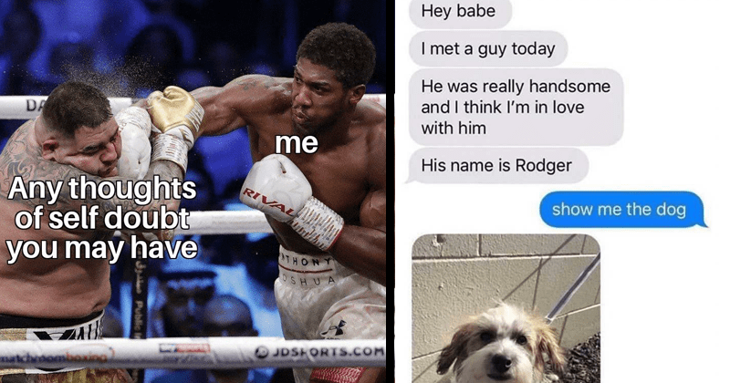 wholesome memes, wholesome tweet, sweet things, loving, family, love, relationships | two man boxing in a ring: Any thoughts self doubt may have. Hey babe met guy today He really handsome and think love with him His name is Rodger show dog