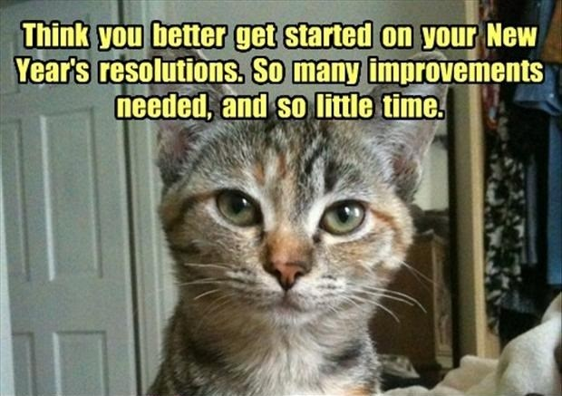 new years funny cats new year resolutions Cats cat memes - 10154757