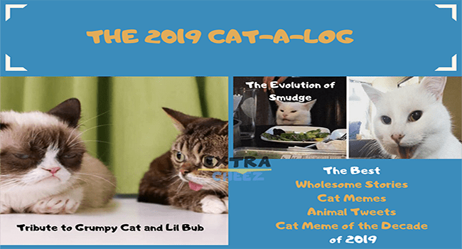 i can has cheezburger cat catalog | the 2019 cat-a-log: tribute to grumpy cat and lil bub. the best wholesome stories, cat memes, animals tweets, cat meme of the decade of 2019