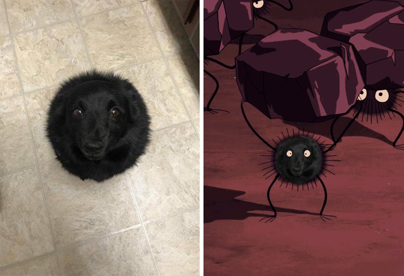 funny doggo dog memes lol dogs tweets pics | black dog photographed from an angle that makes it look like a round poof without limbs. pic of the soot sprites form the movie spirited away