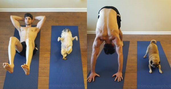funny pictures of a pug dog doing yoga on a mat like a person