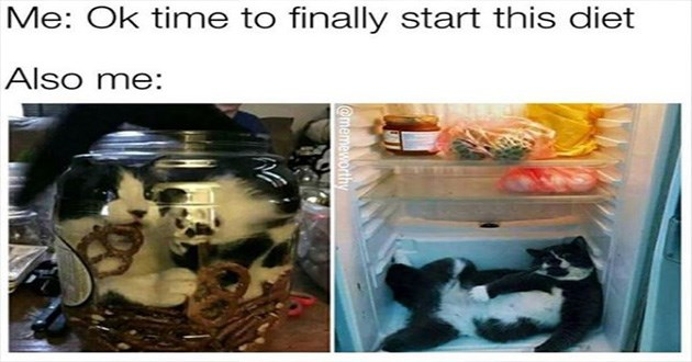 cats funny cat memes lol cute | Ok time finally start this diet Also: cat stuffed inside a jar with pretzels and another fat cat taking up all the space on the bottom shelf of a fridge