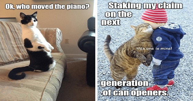 lolcats cats funny memes cat aww cute | Ok, who moved piano? Staking my claim on next generation can openers. this one is mine!