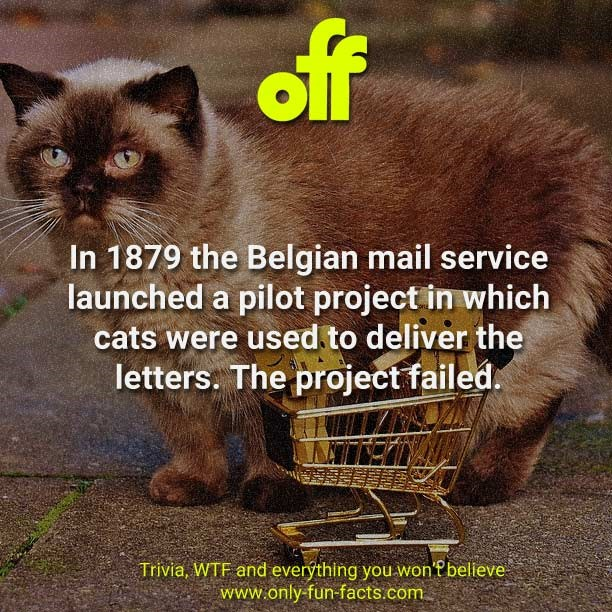 trivia cat facts | 1879 Belgian mail service launched pilot project which cats were used deliver letters project failed. Trivia, WTF and everýthing won'f bellieve www.only-fun-facts.com