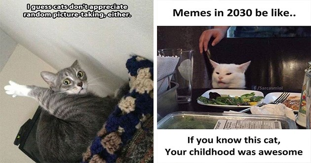 caturday funny cat memes lol aww cute tweets snaps meme | i guess cats don't appreciate random picture-taking, either. Memes 2030 be like f/Sarcasmlol If know this cat childhood awesome.