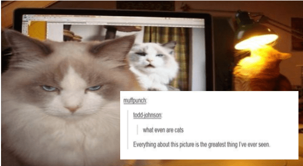funny tumblr posts about animals | muffpunch: todd-johnson even are cats Everything about this picture is greatest thing ever seen