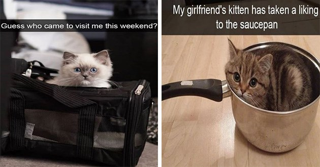 cats snaps snapchat cute cat animals funny aww lol   kitten peeking from a bag Guess who came visit this weekend? kitten sitting in a saucepan My girlfriend's kitten has taken liking saucepan