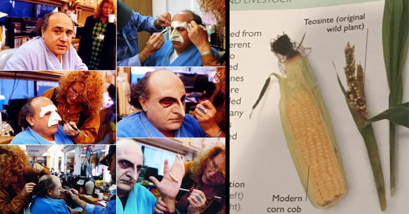 mildly interesting photos, photographs, infographic, frozen succulents, danny devito, batman returns | series of photos showing danny devito being transformed into the penguin on the set of batman returns. corn cob vs what corn used to look like in nature.